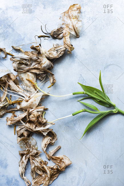 Composition of drying lily flowers in contrast with green leaves