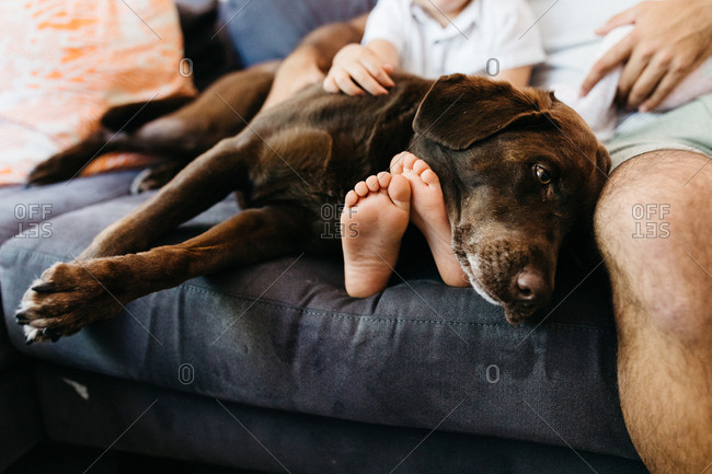 Big dog lying on sofa with little boy and dad
