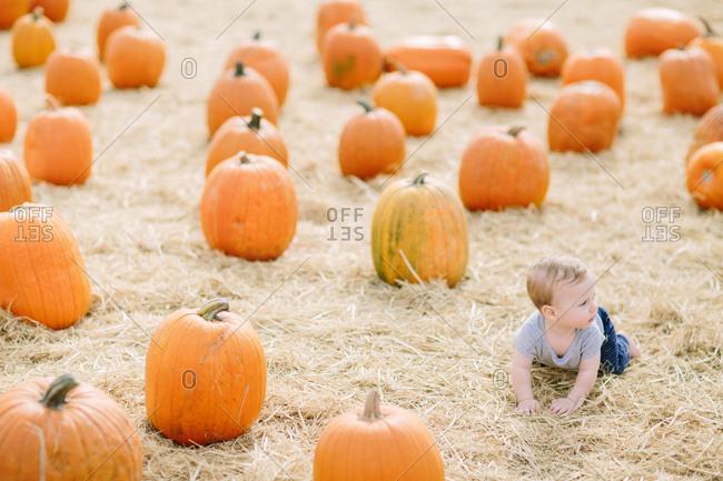 Baby boy crawling in pumpkin patch