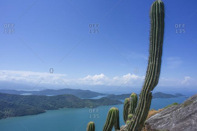 Giant cactus at Sugar loaf peak on the shores of Saco do Mamangua