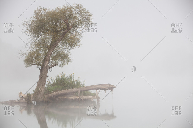 Tree in fog in the backwaters of the Danube River, Stepperg, Bavaria, Germany, Europe