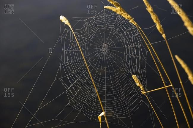 Spider web, Canada, North America