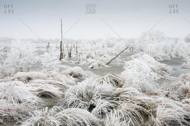 Moor landscape in winter with hoarfrost, Emsland, Lower Saxony, Germany, Europe