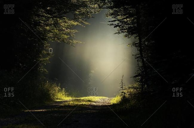 Forest clearing flooded with soft morning light, misty forest passage
