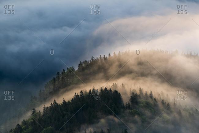 Mountain forest with fog, Herzogstand, Upper Bavaria, Bavaria, Germany, Europe