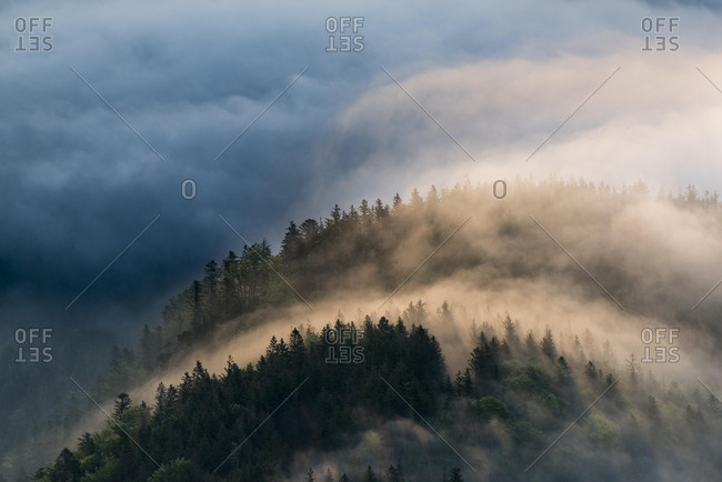Mountain forest with fog, Herzogstand, Upper Bavaria, Bavaria, Germany, Europe