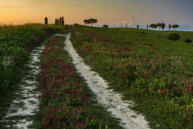 Tuscan landscape, county path, evening mood, San Quirico d'Orcia, Val d'Orcia, Tuscany, Italy, Europe