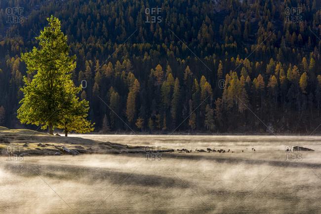 Autumn forest with haze over Lake Silvaplana, Silvaplana, Upper Engadine, Switzerland, Europe
