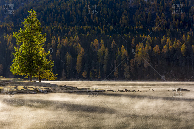 Autumn forest with haze over Lake Silvaplana, Silvaplana, Upper Engadine, Switzerland, Europe