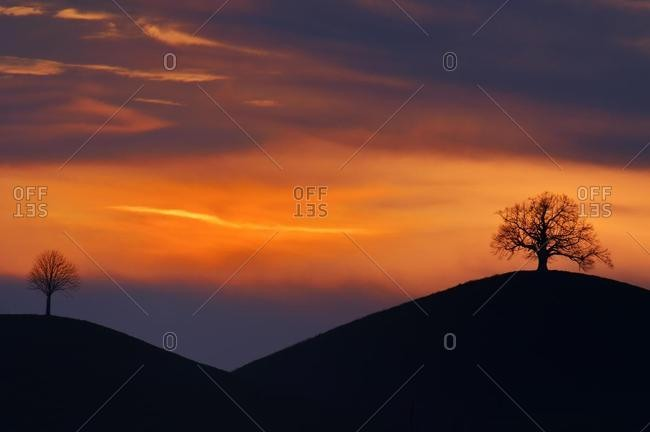 Two trees on the moraine hills, in the evening light, Hirzel, Canton of Zurich, Switzerland, Europe