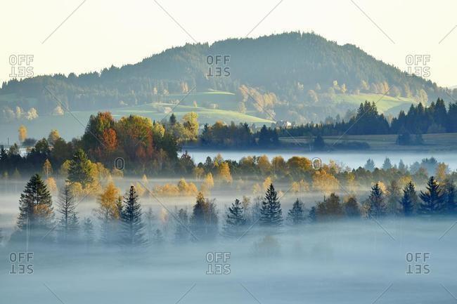 Moor, trees in the morning mist, Rothenthurm, Canton Schwyz, Switzerland, Europe
