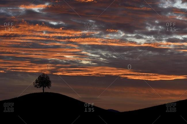 Solitary tree, Linden tree (Tilia), on hill, Canton Zurich, Switzerland, Europe