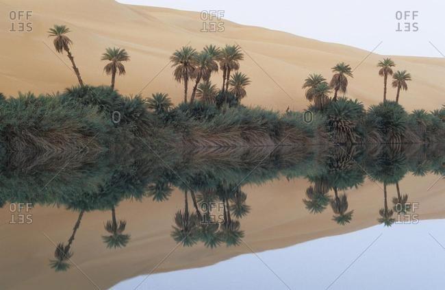 Palm trees and sand dunes at Lake Um el Ma, Erg Ubari, Idhan Awbari, Libya, Africa