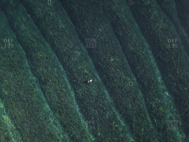 Aerial view of surfer in ocean, Sumbawa, Indonesia