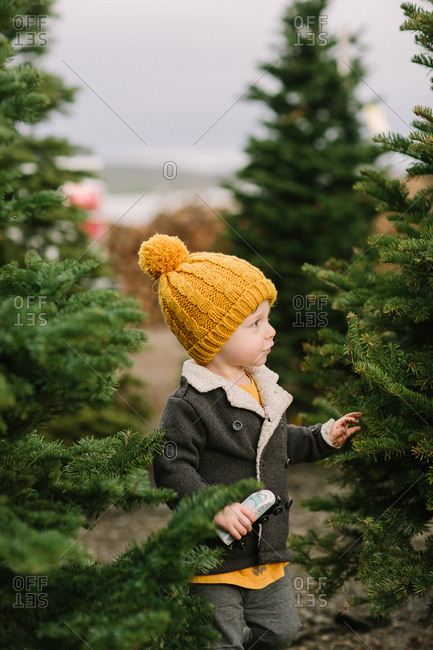 Toddler boy looking at christmas trees