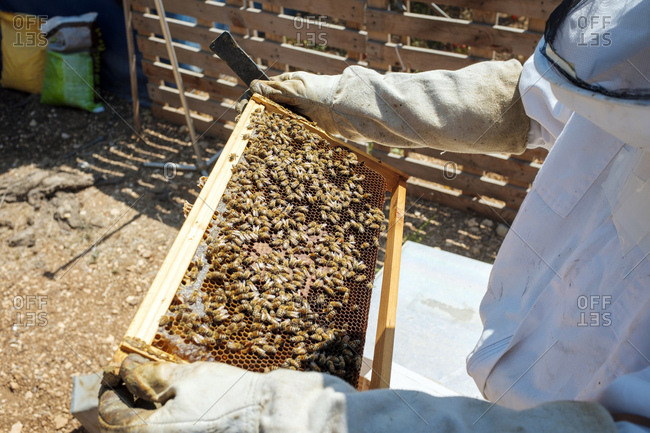 Urban beekeeper checking the hives, ramallah, west bank, palestine.