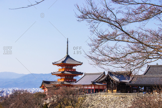 Tourist at kiyomizu-dera temple during cherry blossom time are bloom.