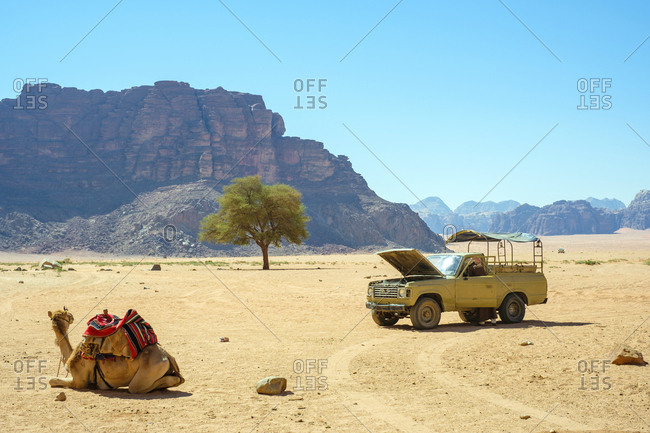 Jordan, aqaba governorate, wadi rum village - june 4, 2017: four-wheel drive truck and camel in wadi rum protected area, jordan