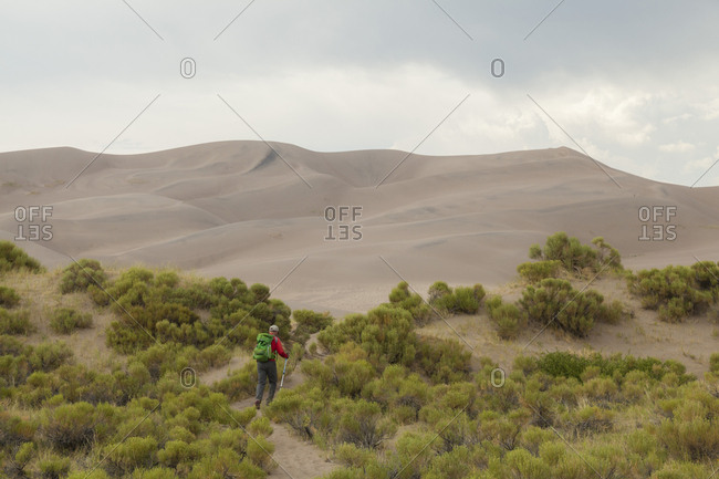 Man hikes through bushes towards sand dunes