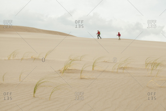 Hikers and blowout grass (redfieldia flexuosa) on sand dune