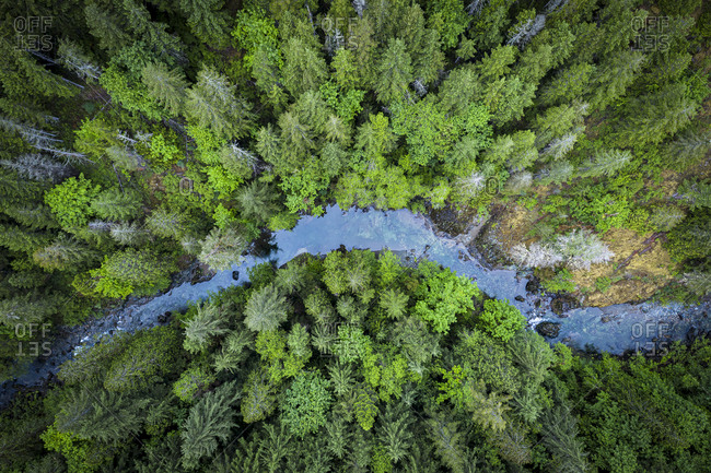 Pine forest and a river from above at Vancouver island, Canada