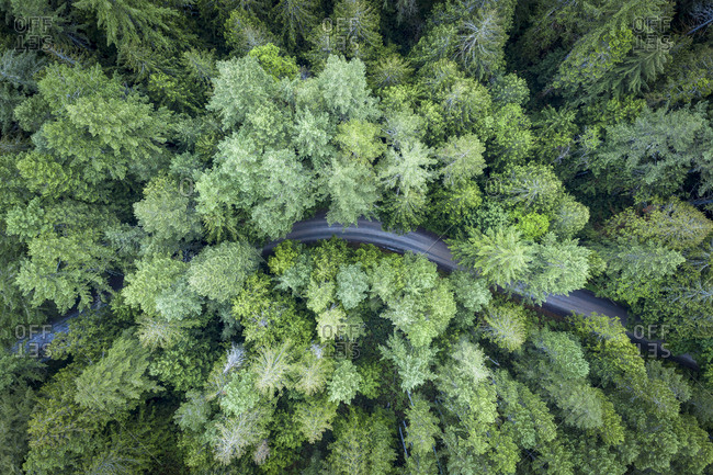 Pine forest and a road from above at Vancouver island, Canada