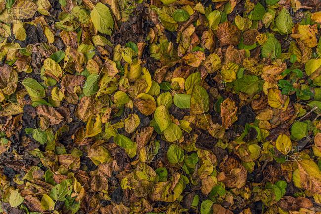 Autumn leaf in the floor