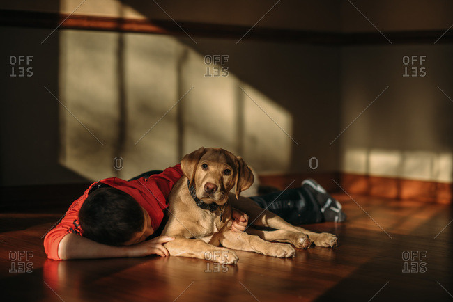 Young boy laying on wood floor with yellow labrador puppy.