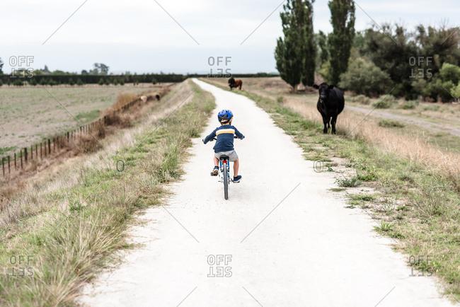 Preschooler riding a bike on a path next to a cow