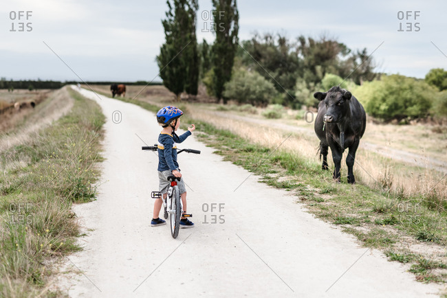 Preschooler with a bike staring at a cow