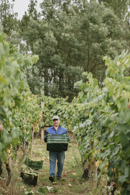 Man carrying a box in a vineyard