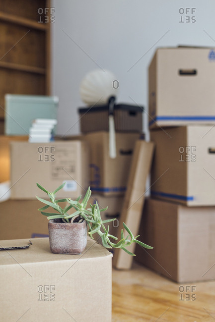 Potted plant on cardboard box in an empty room in a new home