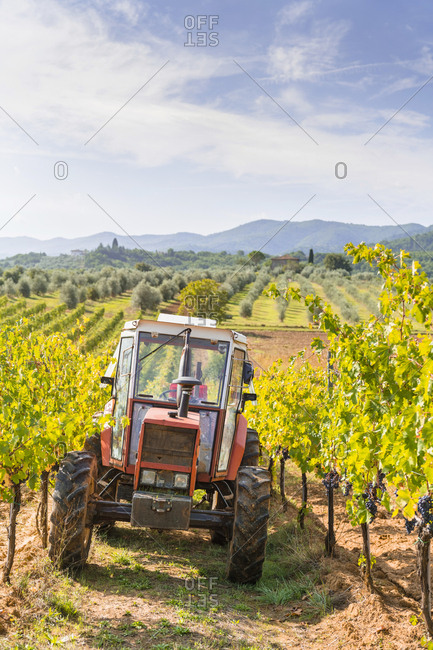 Tractor parked in a vineyard