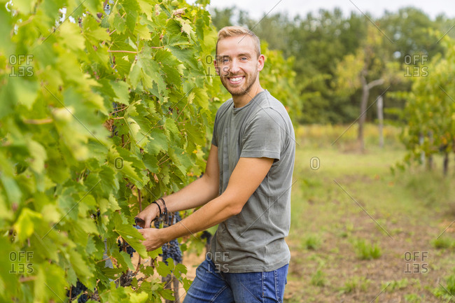 Portrait of smiling young man harvesting grapes in vineyard