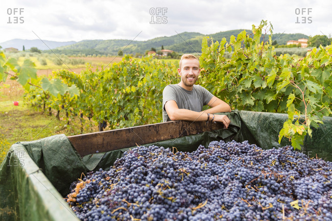 Portrait of smiling young man at trailer with harvested grapes in vineyard
