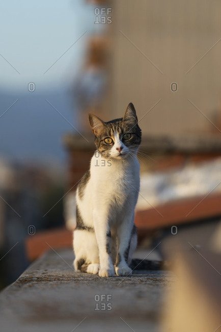 Cat sitting on fence near sidewalk among houses on narrow street