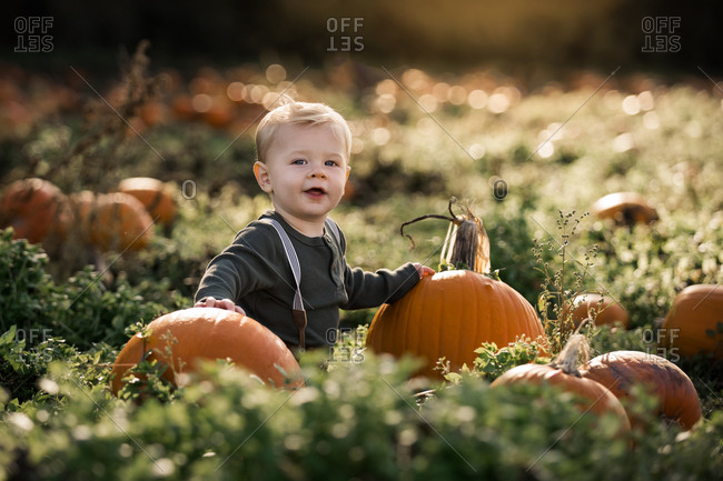 Baby boy sitting in a pumpkin patch at sunset