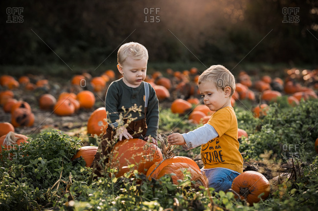 Two little blonde boys in a pumpkin patch at sunset