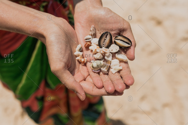 Hands holding seashells found on a beach in Bali