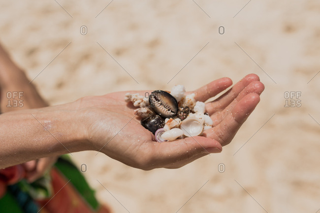 A woman's hand holding seashells found on a beach in Bali