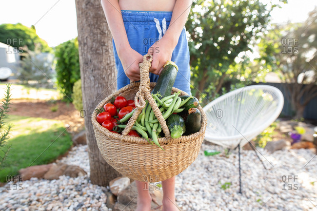 Boy holding a basket of fresh picked vegetables from a garden