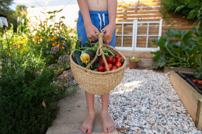 Boy holding a basket filled with fresh picked vegetables from a garden