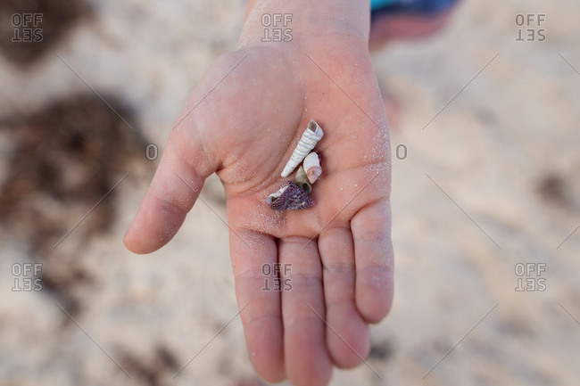 Child's hand holding small seashells on a beach