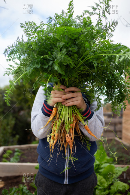 Boy holding a bunch of fresh picked carrots in front of his face