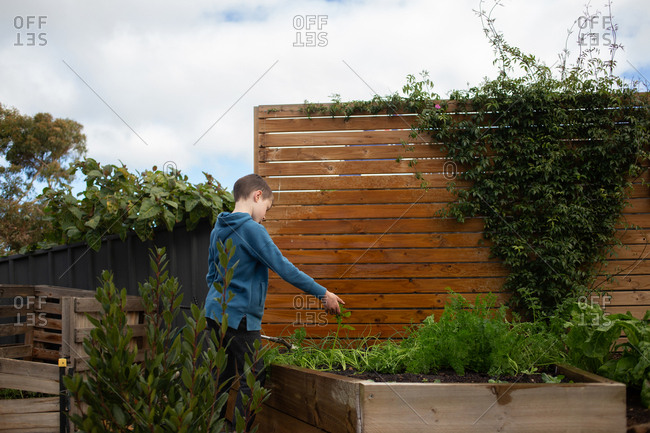 Boy looking at plaints in a raised garden