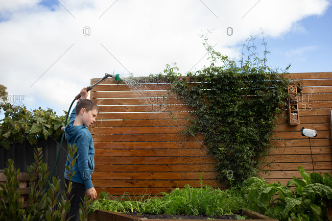 Boy watering young plants in a raised garden with a hose