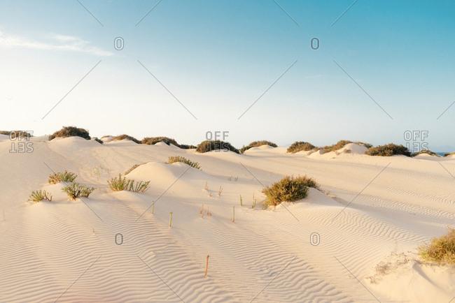 Serene landscape of empty dry desert with white dunes and rare bushes in Fuerteventura, Las Palmas, Spain