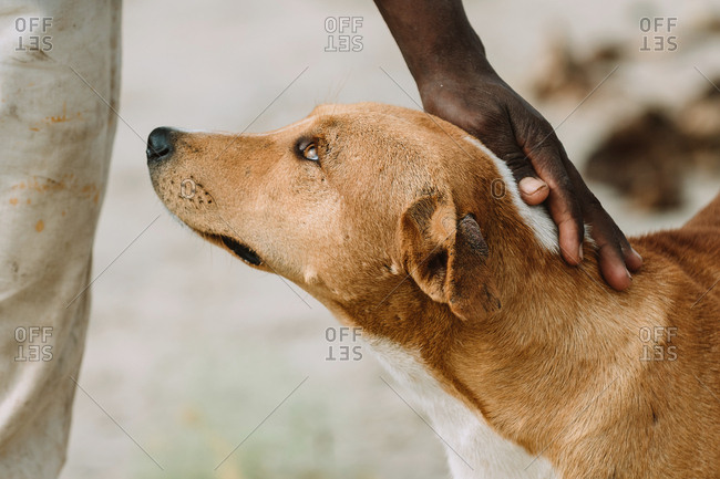 Unrecognizable poor African person stroking fur of stray dog on street of town in Gambia
