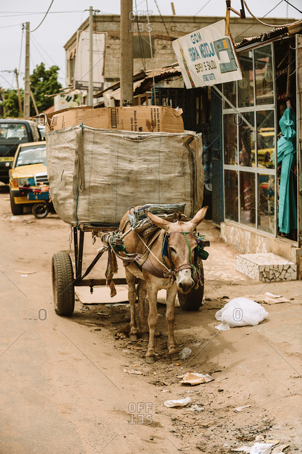 Gambia - August 6, 2019: Small brown donkey dragging large heavy bale with boxes along street