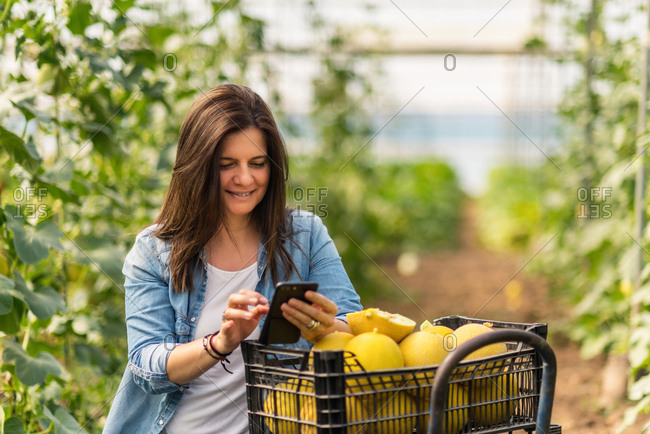 Adult woman focusing on screen and interacting with smartphone while standing alone beside trolley with yellow melons